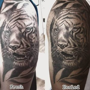 A hyper-realism portrait tattoo of a tiger, featuring images of both the fresh and healed tattoo by Tattoos and Tales