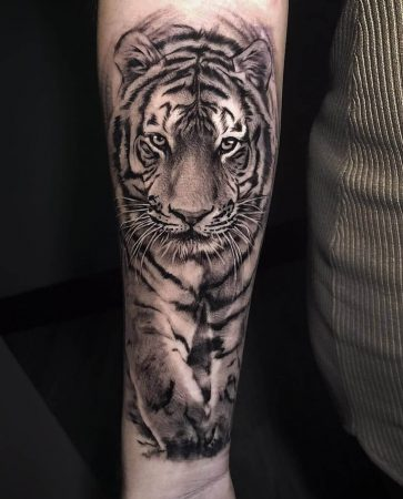 A realism portrait tattoo of a tiger walking done on the forearm