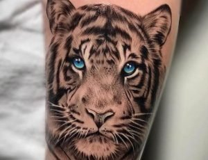 A realism portrait tattoo of a white tiger done on the bicep