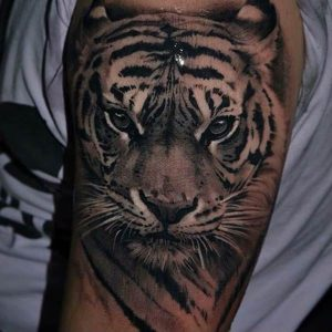 A blackwork realism portrait tattoo of a tiger on the bicep